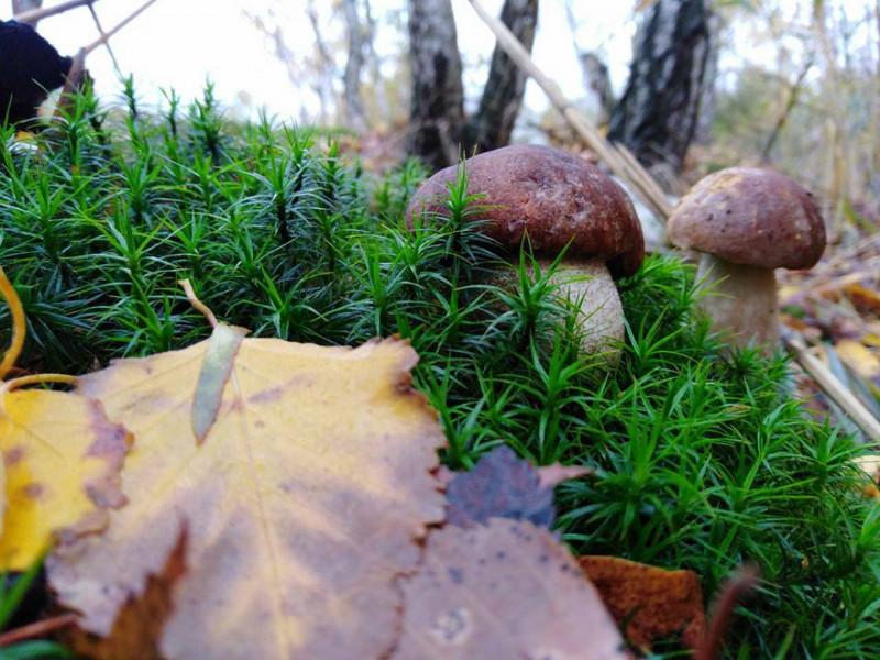 Поет з Маневиччини показав світлини останніх осінніх грибів у Чехії