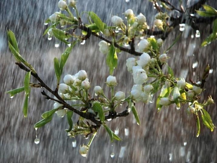 Прогноз погоди у Маневичах на 17 березня