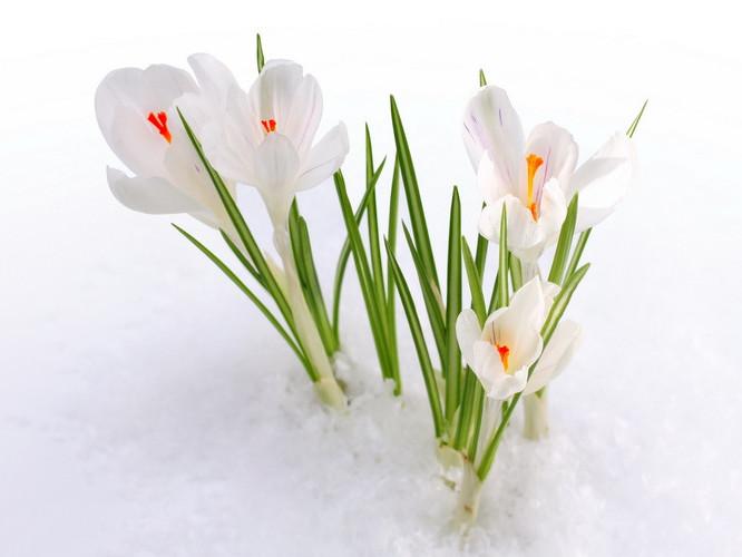 Прогноз погоди у Маневичах на 27 березня