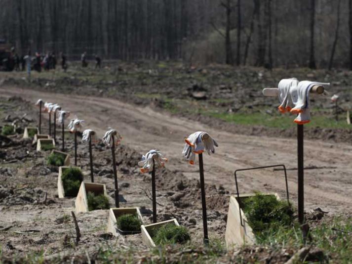 Як провели лісокультурну кампанію у Поліському лісовому господарстві