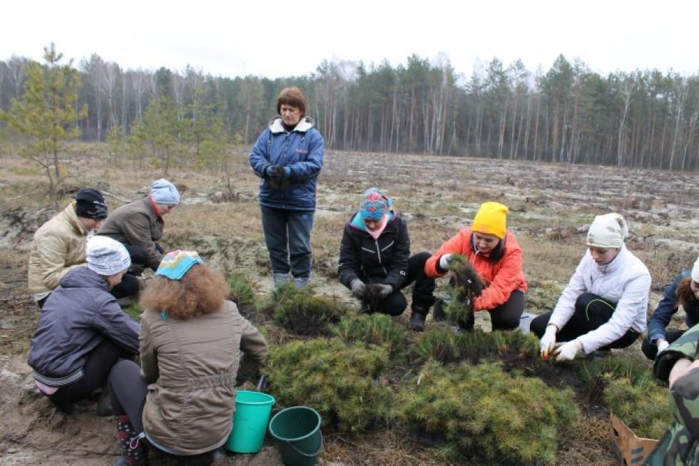 На Волині посадили 2,5 тисячі гектарів лісу