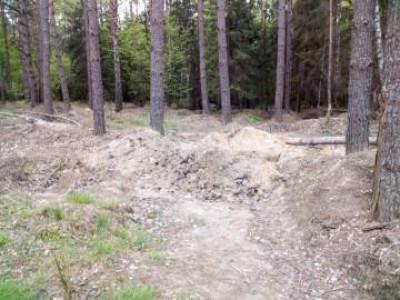 У Куклинському лісництві затримали буршитнокопачів