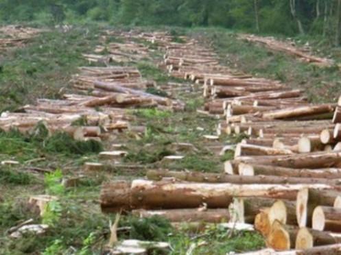 У Ківерцівському районі затримали крадіїв лісу з Маневиччини