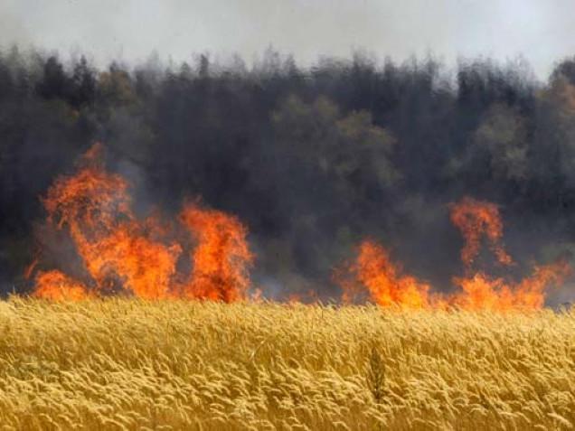 Як вберегти свій врожай від пожеж