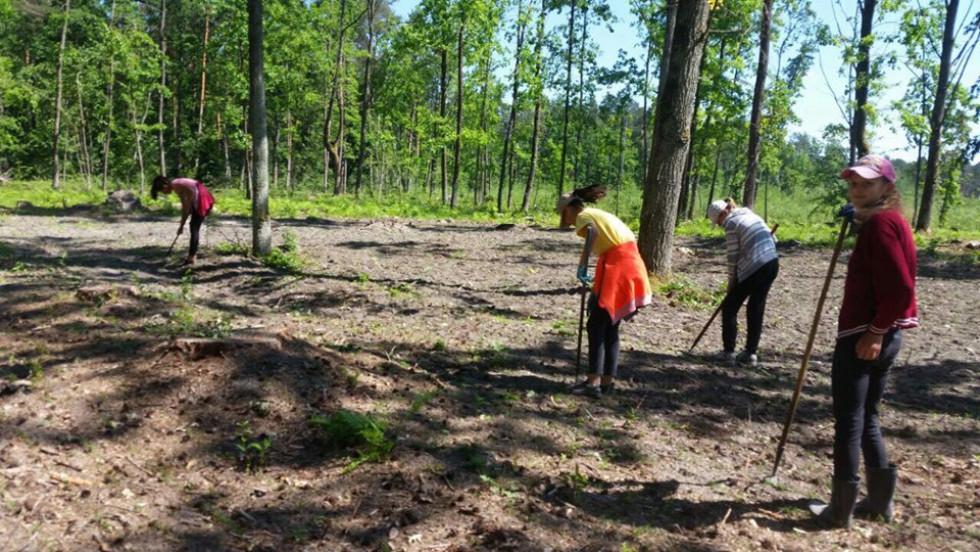 Як у Поліському лісовому господарстві доглядають за розсадниками