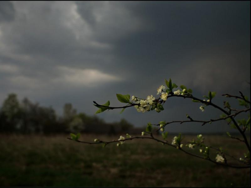 Прогноз погоди у Маневичах на 11 липня