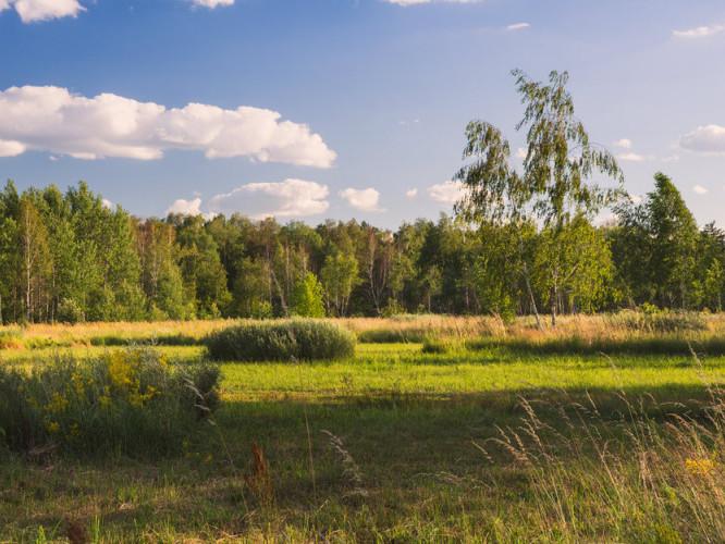 Прогноз погоди у Маневичах на 24 липня