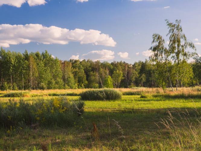 Прогноз погоди у Маневичах на 17 серпня
