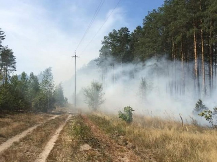 Пожежа на Маневиччині: повідомили причини загоряння лісу біля райцентру