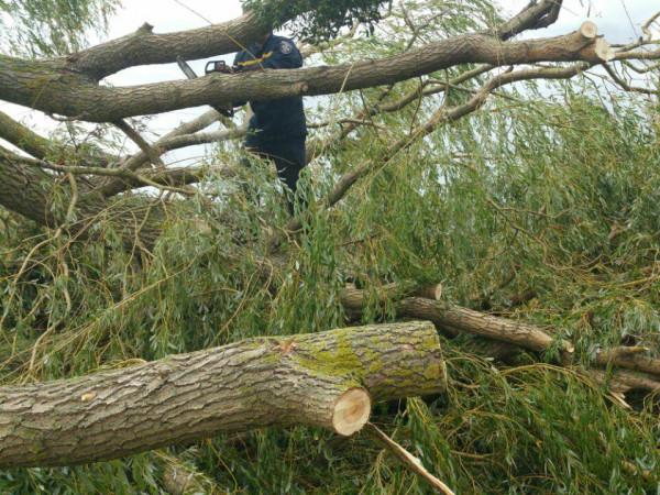 У Троянівці вітер повалив дерева