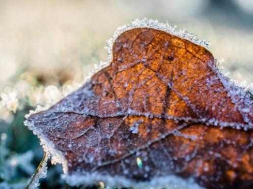 На Волинь насуваються заморозки