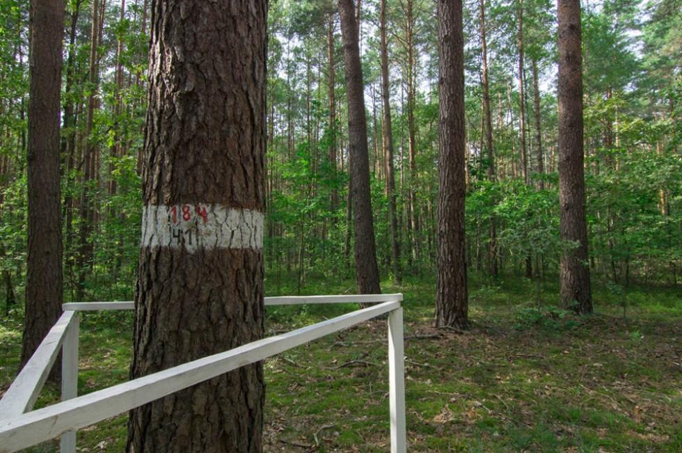 Маневицькі лісники розповіли, з яких дерев беруть насіння для нових насаджень