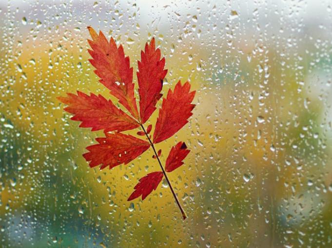 Прогноз погоди у Маневичах на 11 жовтня