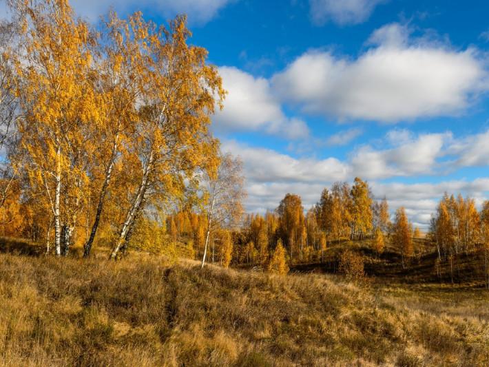 Прогноз погоди у Маневичах на 12 жовтня