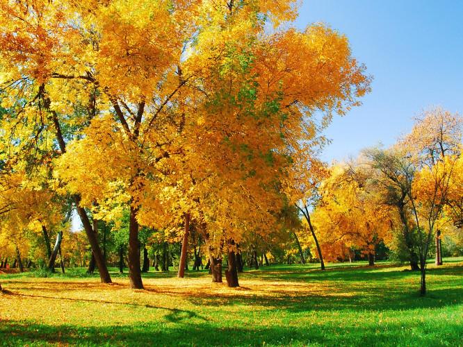 Прогноз погоди у Маневичах на 13 жовтня