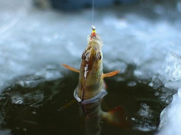 На Маневиччині заборонили ловити рибу в зимувальних ямах