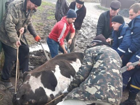 У Оконську врятували з болота корову