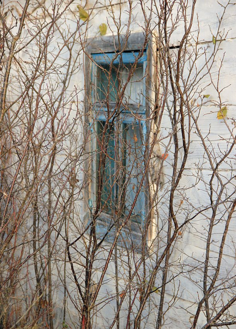 Біля закинутої хати в Стобихві