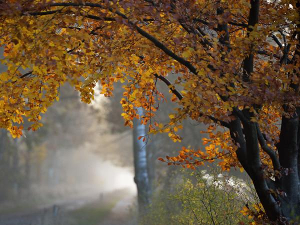Прогноз погоди у Маневичах на 24 листопада