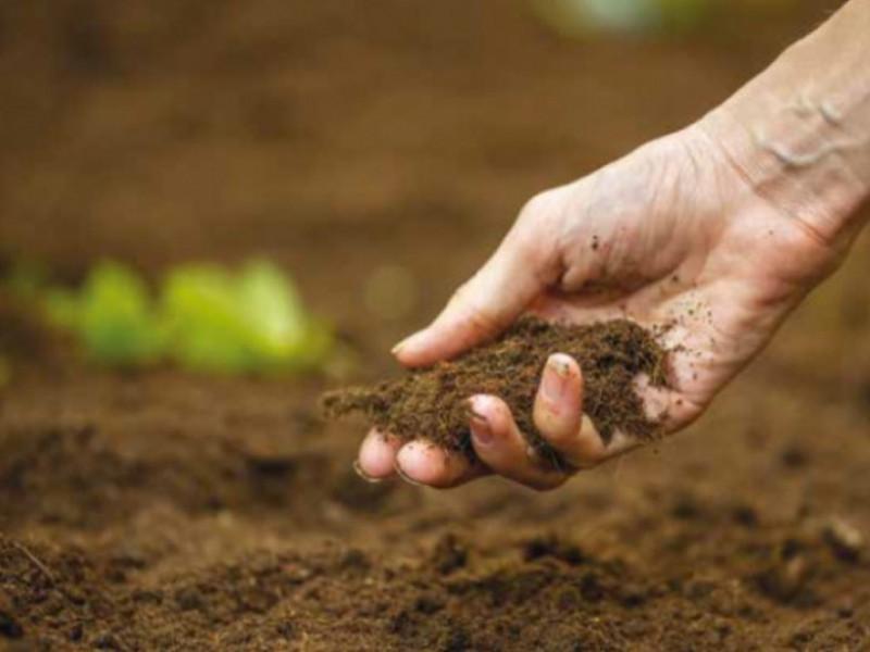 Скільки вартуватиме гектар землі при відкритті ринку