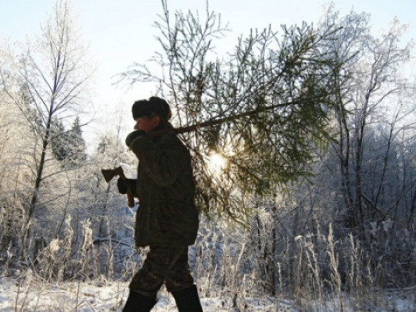 Маневичанам нагадали про штрафи за незаконну вирубку новорічних ялинок