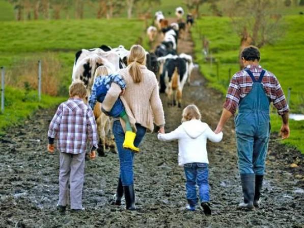 В Україні спростили реєстрацію сімейних молочних господарств