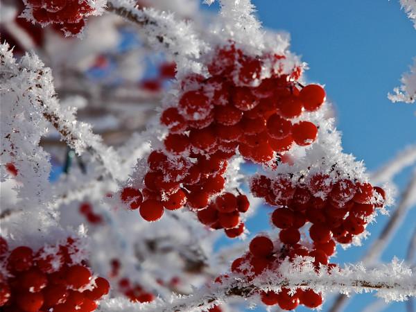 Прогноз погоди у Маневичах на 7 грудня