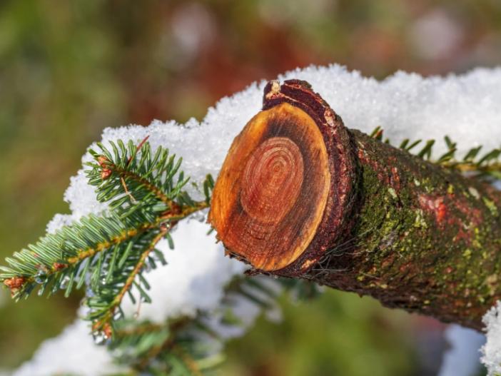 Прогноз погоди у Маневичах на 11 грудня