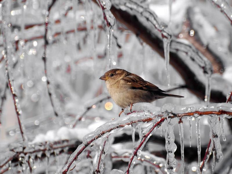Прогноз погоди у Маневичах на 8 січня