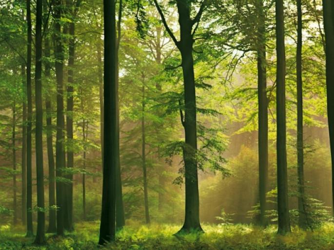 Як маневицькі лісівники вирощують «легені планети»