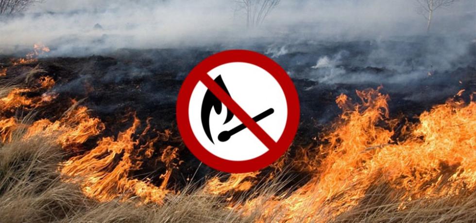 Маневицький район: лісники закликають не випалювати суху траву