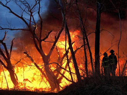 Лісники закликають не випалювати суху траву