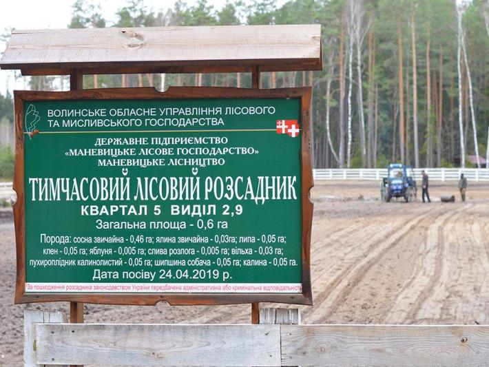 На території Маневицького лісництва діє тимчасовий лісовий розсадник
