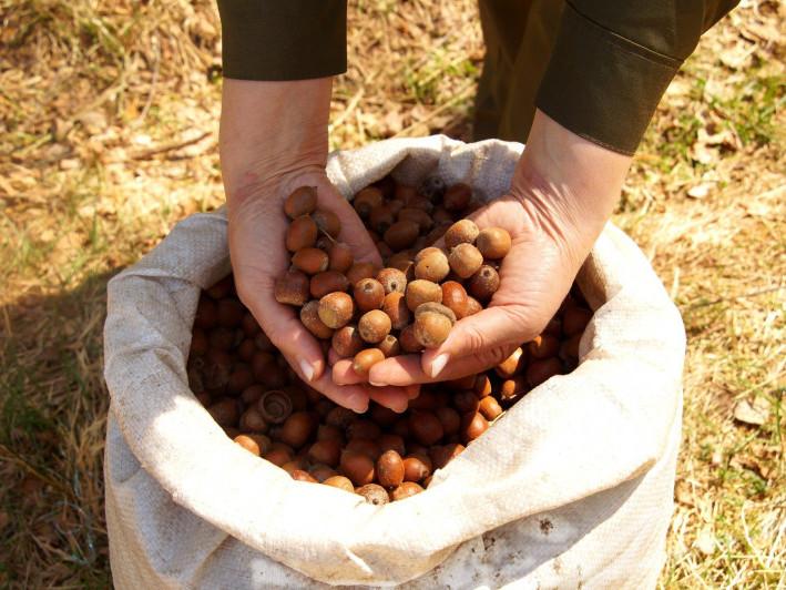 На території Поліського лісового господарства діє 14 тимчасових розсадників