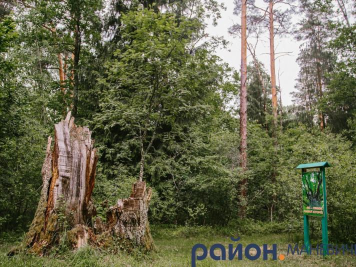 Прогноз погоди у Маневичах на 7 липня