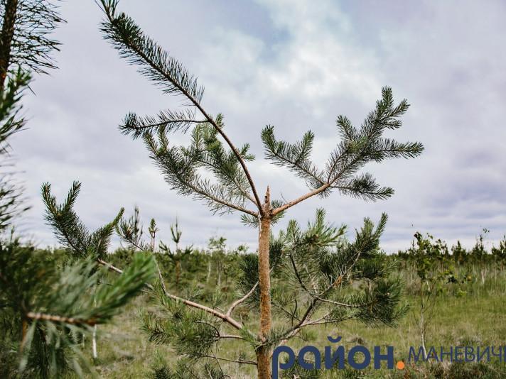 Прогноз погоди у Маневичах на 28 липня