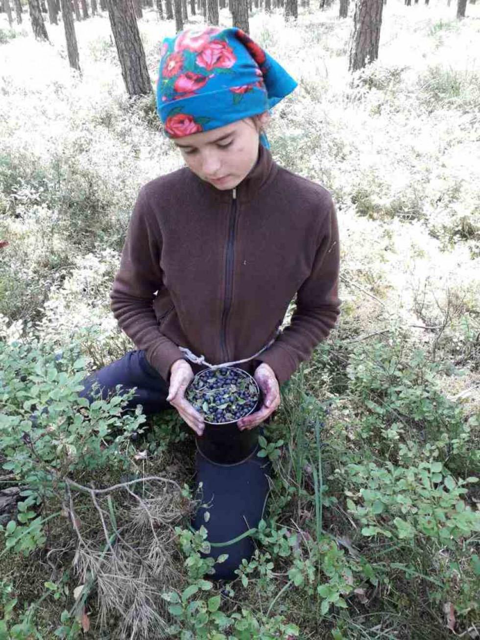 Учні Новорудського лісництва готують дослідницьку роботу про волинську чорницю