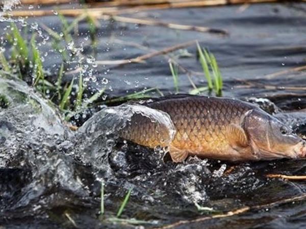 З 1 листопада розпочинається заборона на вилов риби зимувальних ямах