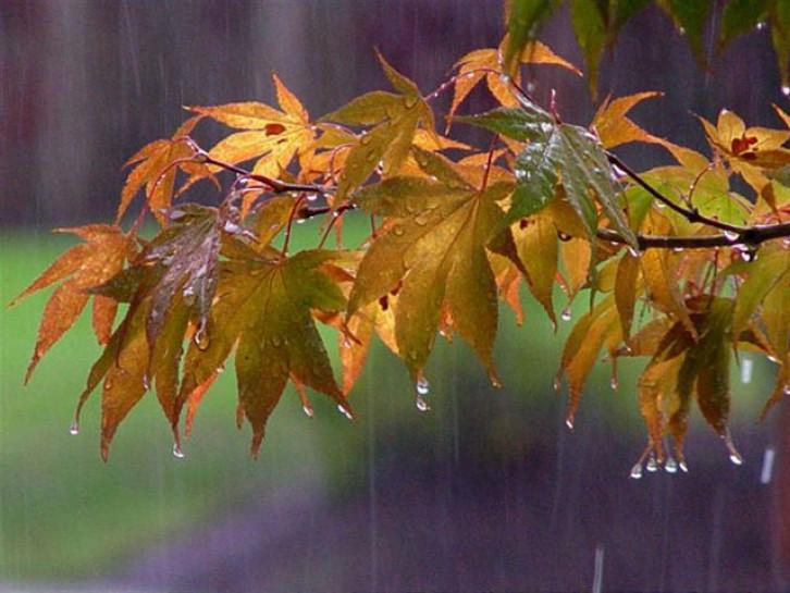Прогноз погоди у Маневичах на 17 листопада
