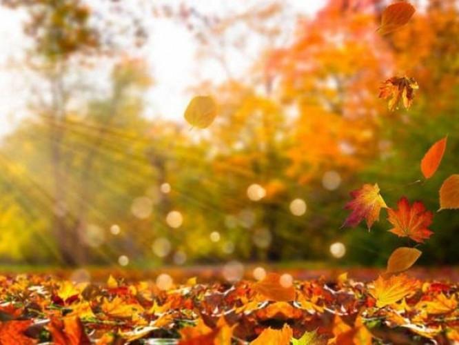 Прогноз погоди у Маневичах на 22 листопада