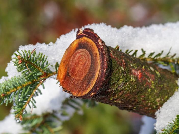 Прогноз погоди у Маневичах на 7 січня