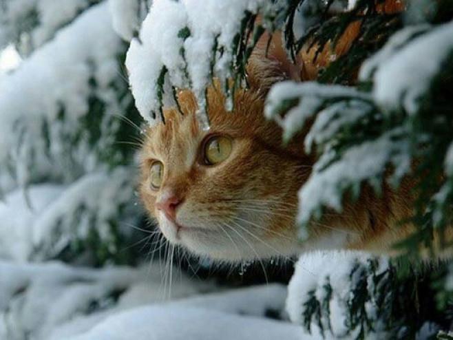 Прогноз погоди у Маневичах на 13 січня