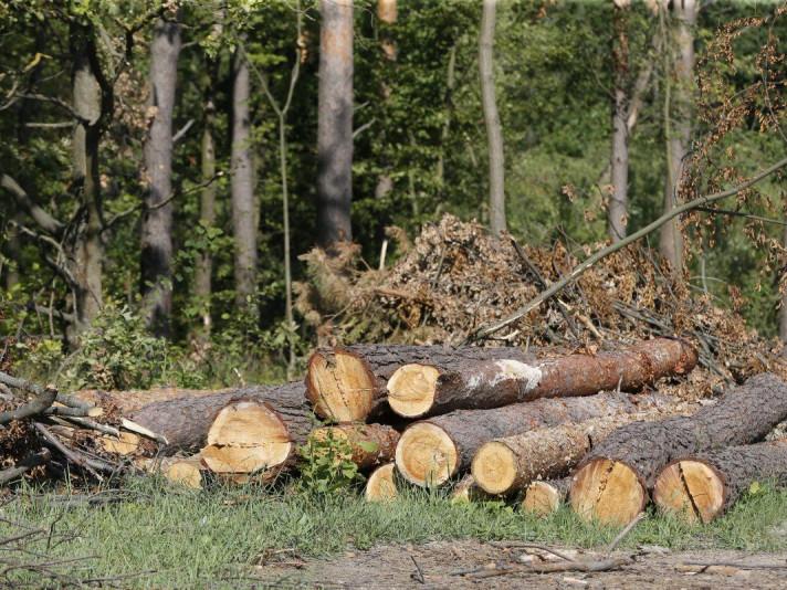 Картинки по запросу незаконні рубки лісу