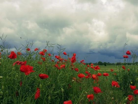 Погода у Маневичах на 7 липня