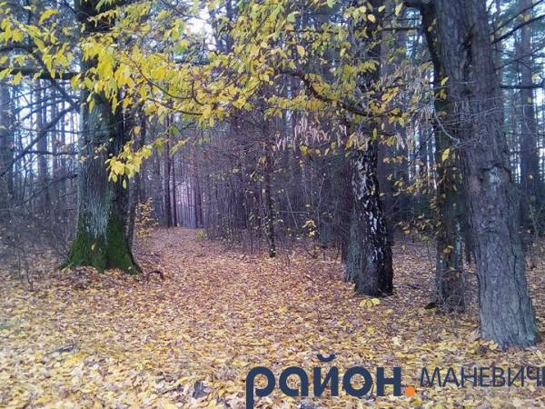 Прогноз погоди у Маневичах на 28 жовтня