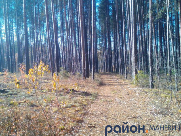 Прогноз погоди у Маневичах на 3 листопада