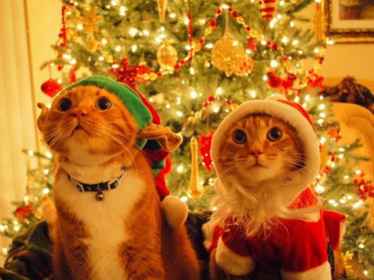 У грудні маневичан чекає додатковий вихідний день
