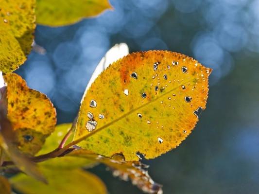 Прогноз погоди у Маневичах на 10 листопада