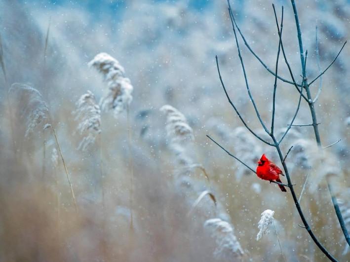 Прогноз погоди у Маневичах на 3 грудня