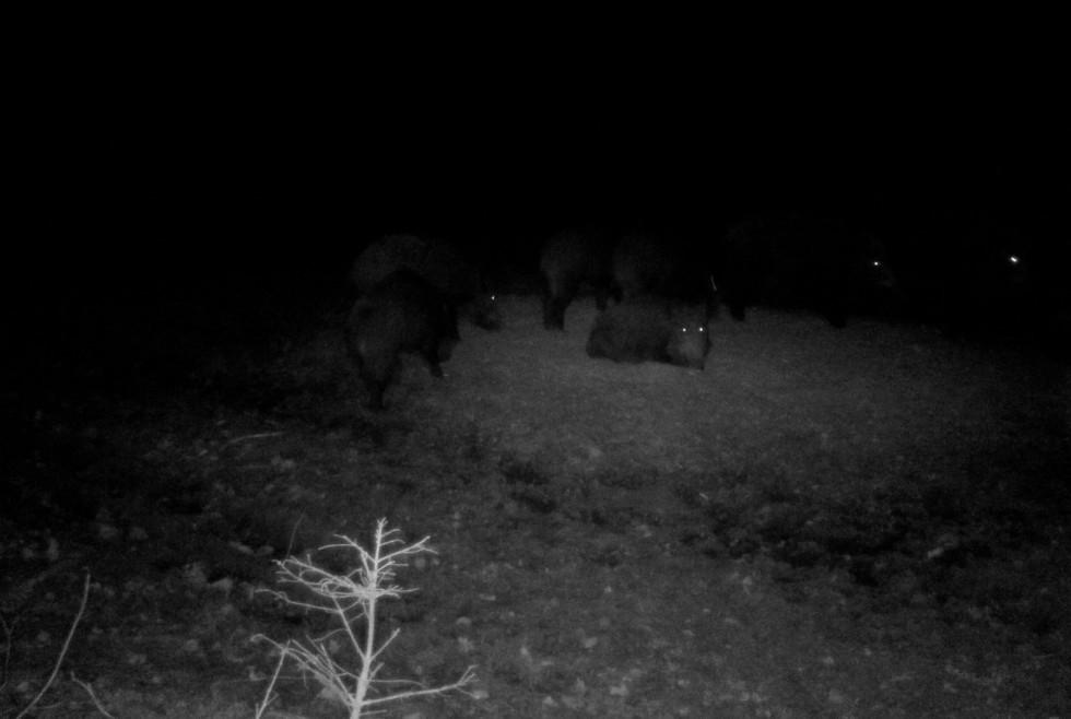 На Маневиччині показали як підгодовують диких тварин